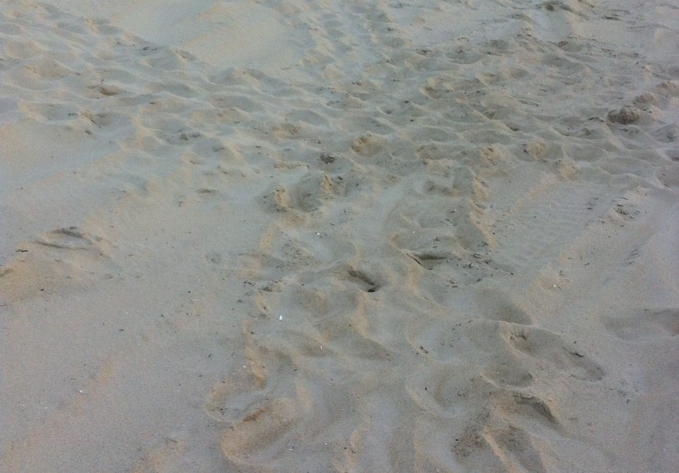 10-July-2013 False Crawl in Carova