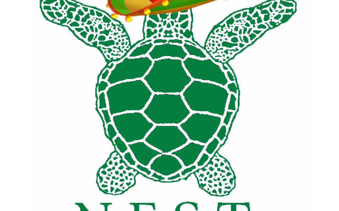 Fiesta for Sea Turtles!!