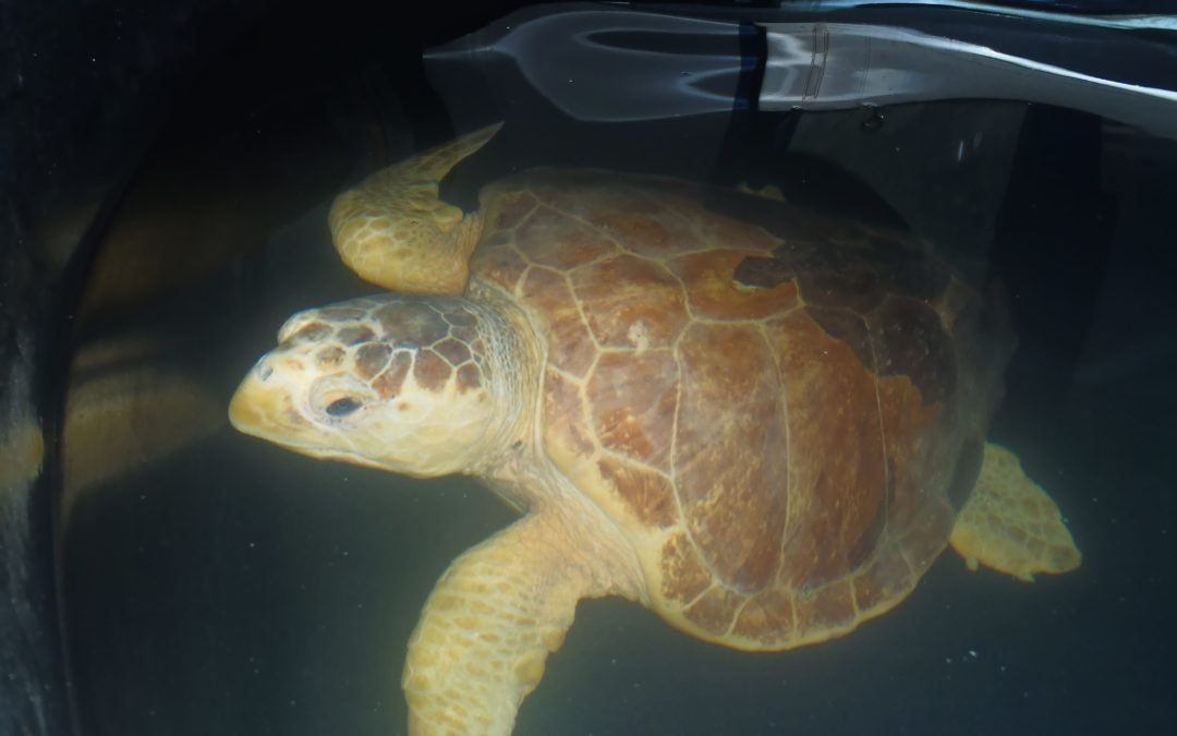Sea Turtle Release – Saturday October 5