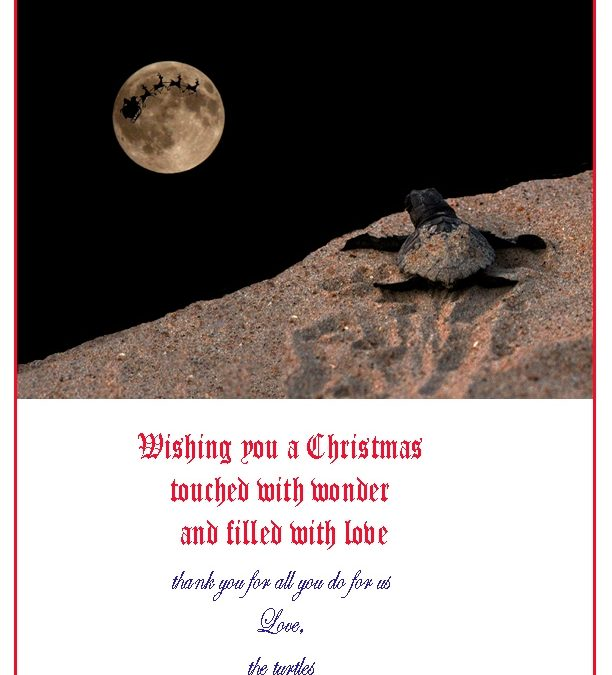 Merry Christmas from the Turtles!!