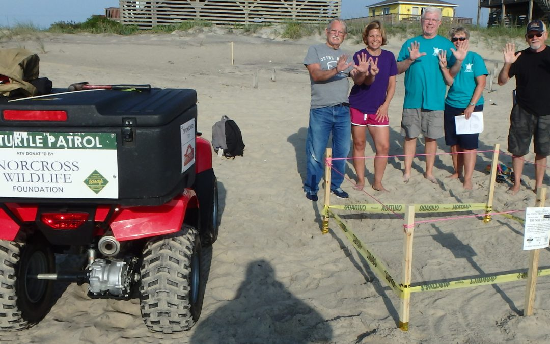 2016 sea turtle nest #13