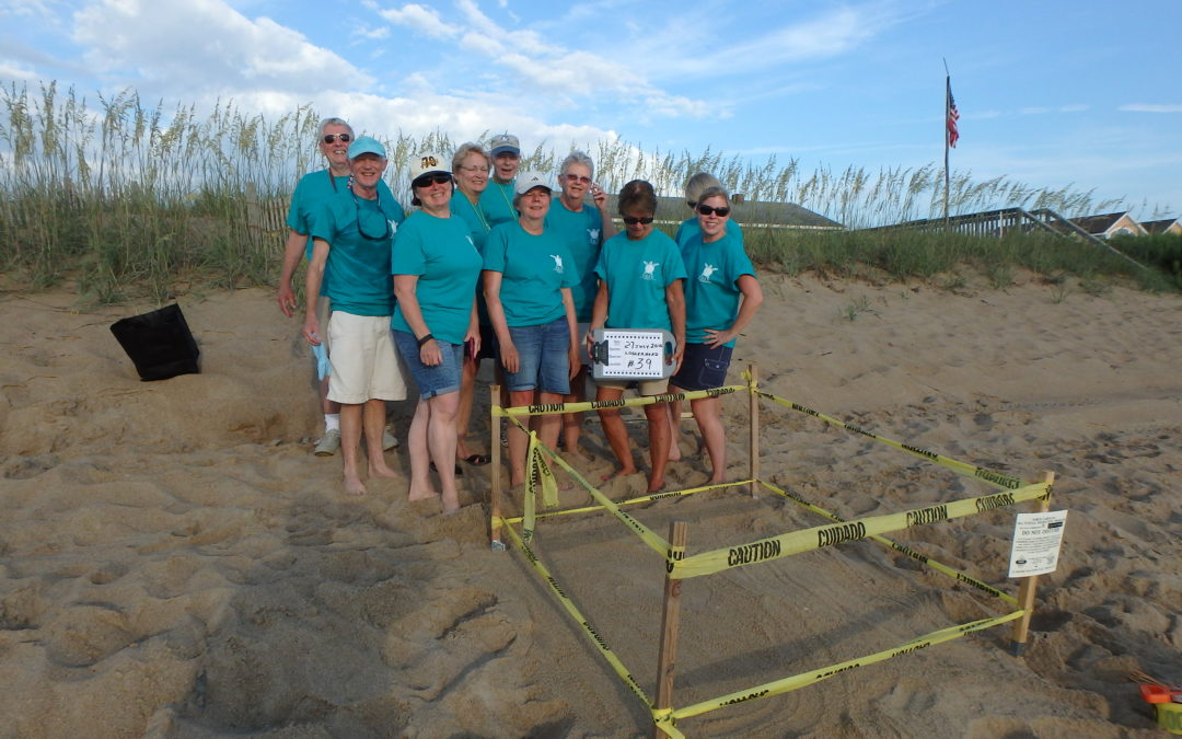 Sea turtle nest #39 in Southern Shores