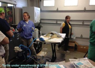 EL STAR under anesthesia
