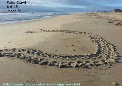 TM false crawl 2015