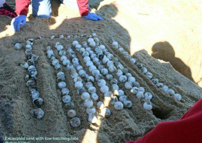 peg nest excavation