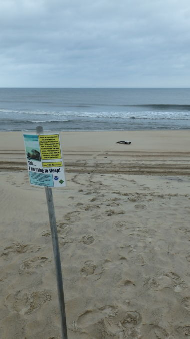 Signs placed at a distance to advise beach users of R&R time for the Harp.