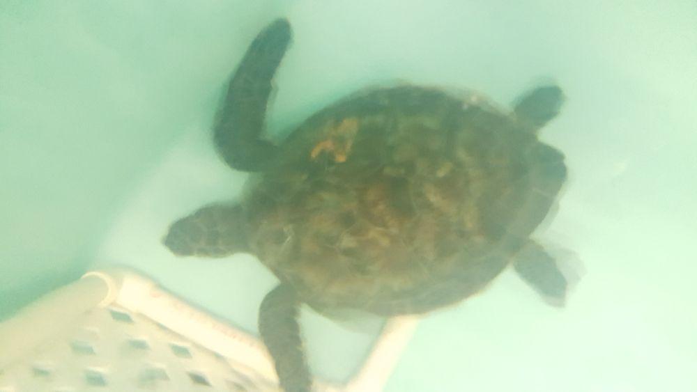 turtle 25