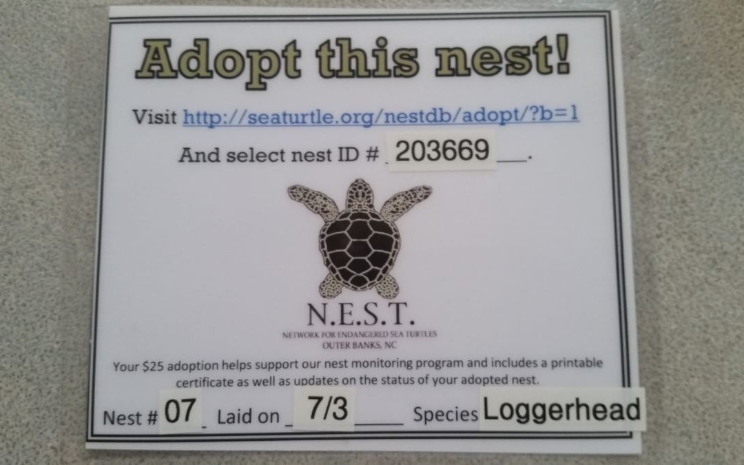 Sea Turtle Adopt-A-Nest 2018